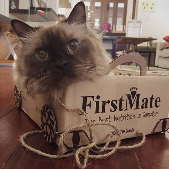 First Mate Cat & Kitten Dry Food Formula