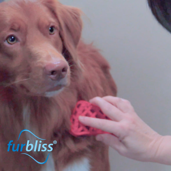 Furbliss Grooming Brushes for Pets