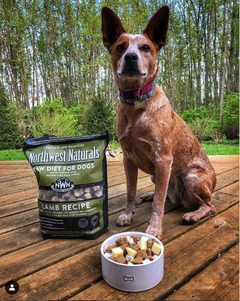Northwest Naturals Freeze Dried Lamb Nugget Diet for Dogs, image of dog with food