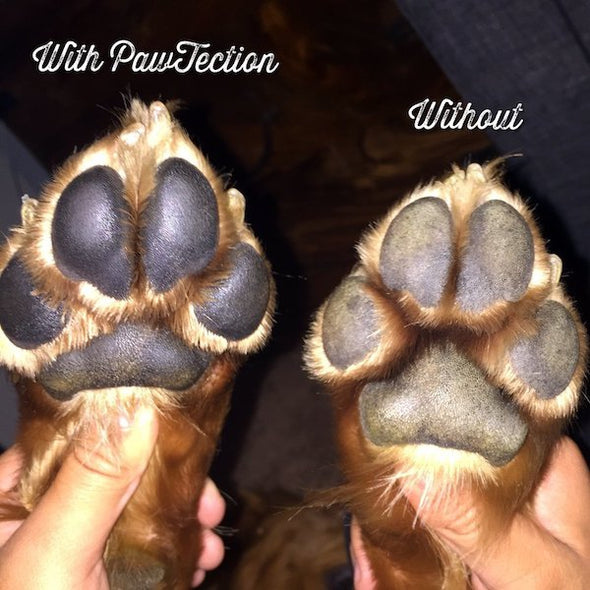 Natural Dog Company's Organic PawTection Balm for Dogs, before and after paw images
