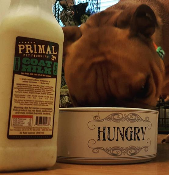 Primal's Raw Goat Milk for Dogs and Cats, dog drinking