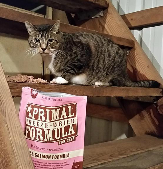 PRIMAL's Raw Freeze-Dried Feline Beef & Salmon Formula, image of cat