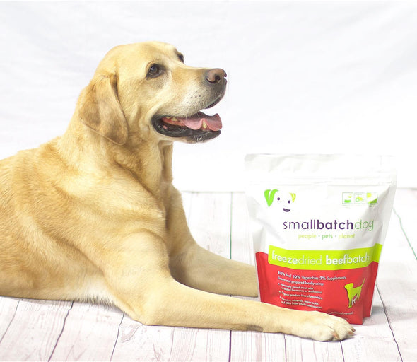 Small Batch Freeze Dried Beef Dog Food, dog poses with food
