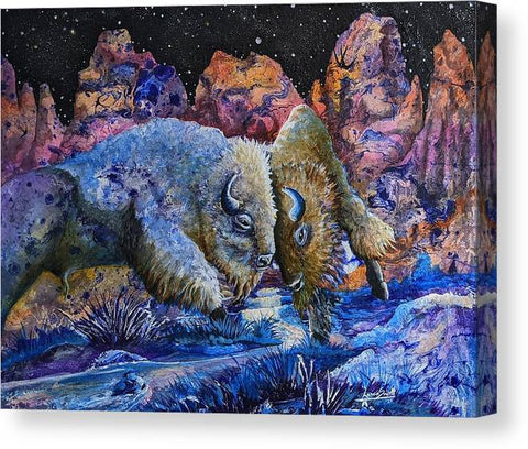 Badlands, Two Buffalo Play Fighting - Canvas Print