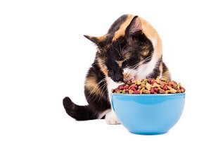 support well-being of your cat
