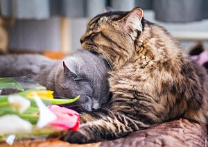 support wellbeing of your cat