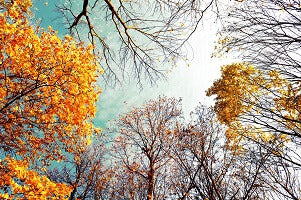 changing of seasons to fall