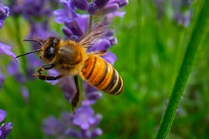 facts about hemp save bees
