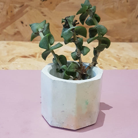 cream mix eme planter