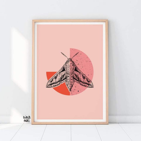Hawk Moth art print