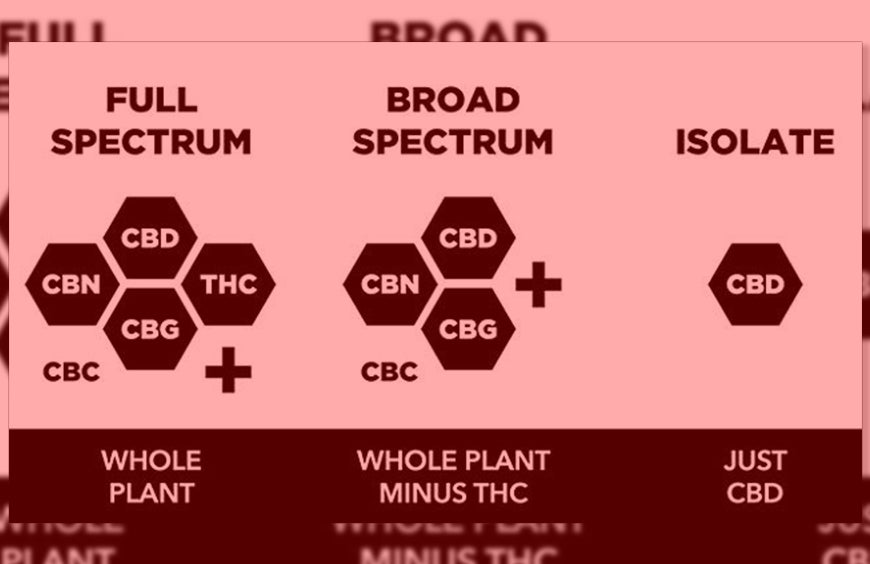 The Difference Between CBD Isolate, Full Spectrum, And Broad Spectrum