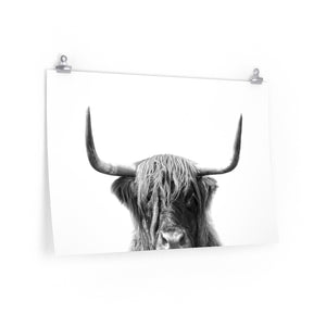Large black and white highland cow art print for framing.