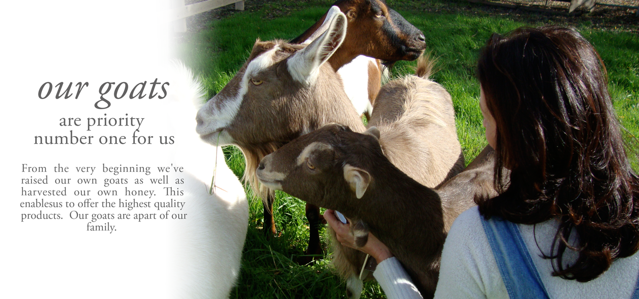 Our goats are priority number one to us. From the very beginning we've raised our own goats as well as harvested our own honey. This enablesus tooffer the highest quality  products.  Our goats are part of our family