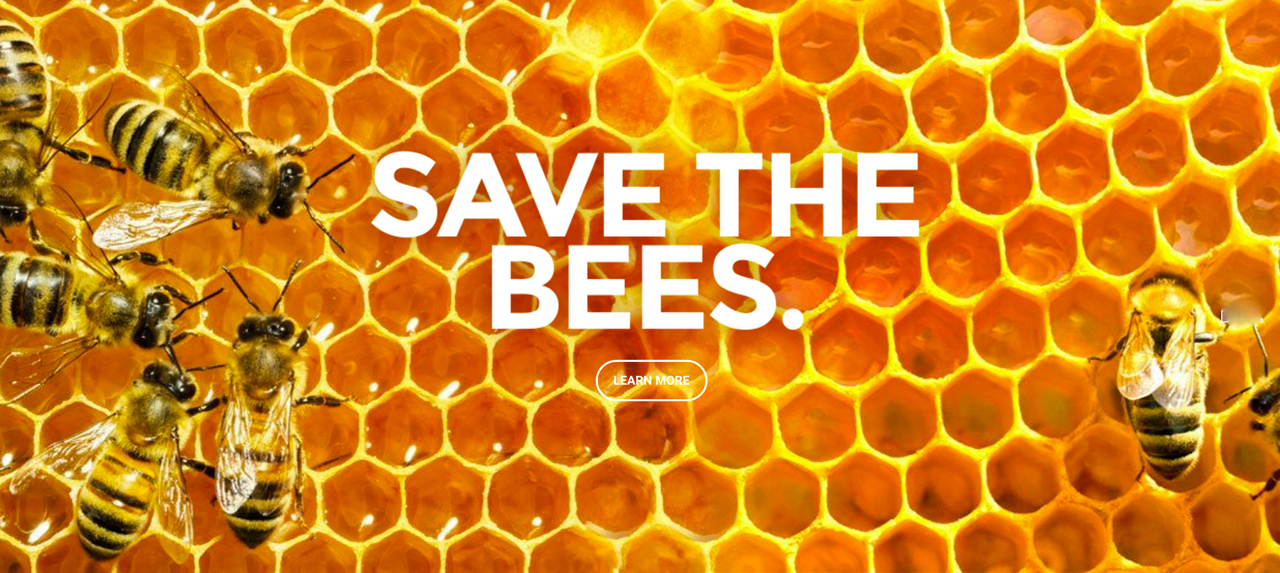 save_the_bees_photo
