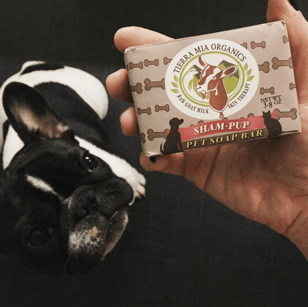 Sham-pup_pet_soap_bar_in_hand_of_french_pit