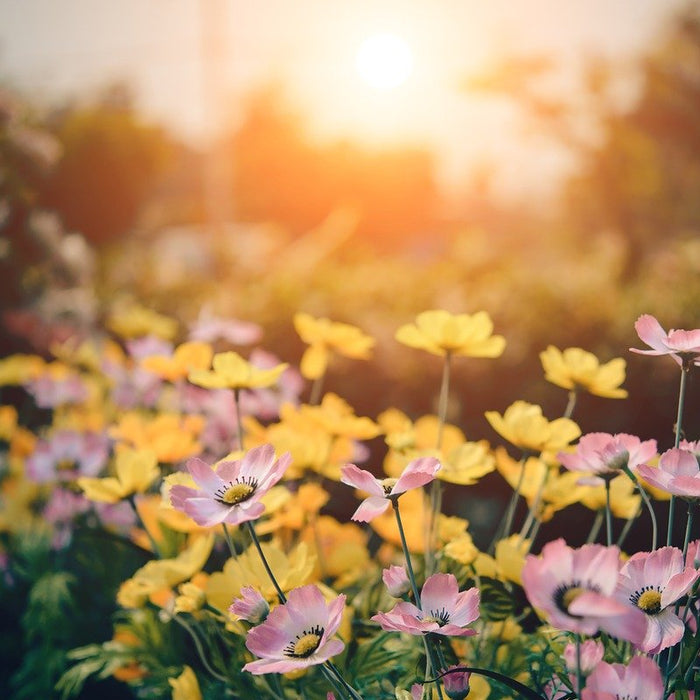 How to Prepare Your Garden in Spring for a Great Summer