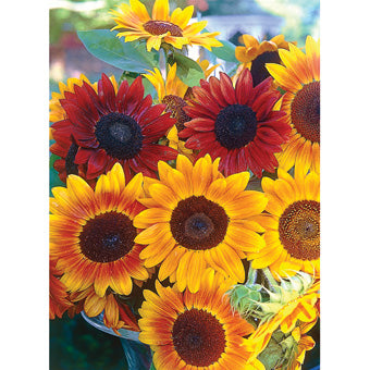SUNFLOWER AUTUMN BEAUTY 1 LB