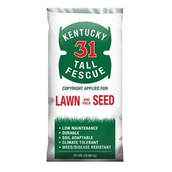TALL FESCUE KENTUCKY 31 50 LB