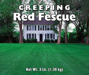 FESCUE CREEPING RED