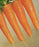 Carrot Danvers Half Long 1/4 OZ