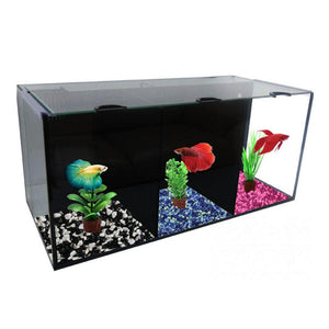 Villa Trio Aquarium Kit with 3 Crowntails and Food