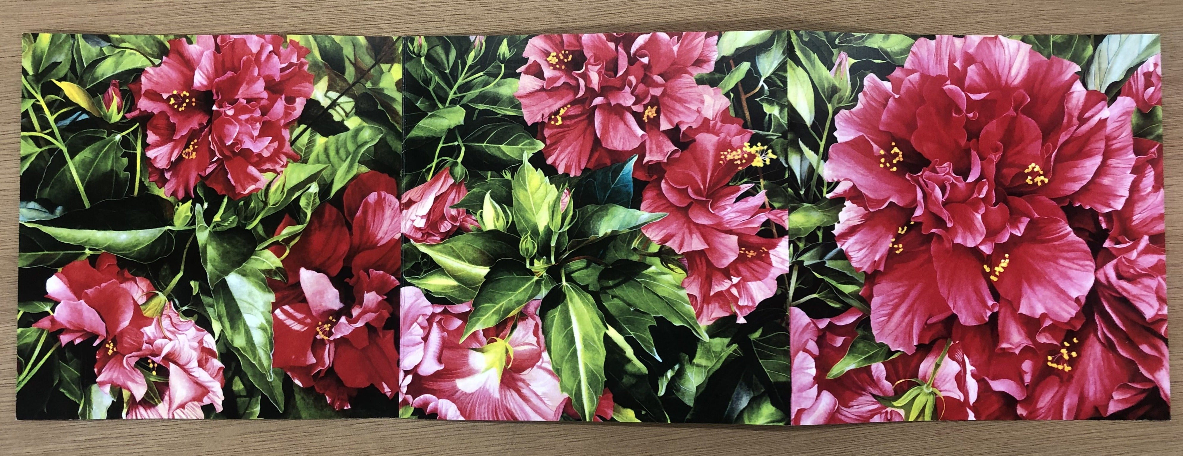 Hibiscus Triptych - Art Print & Card by Sylvia Marsters