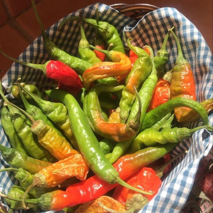 Local organic hot peppers by @marilenadubai