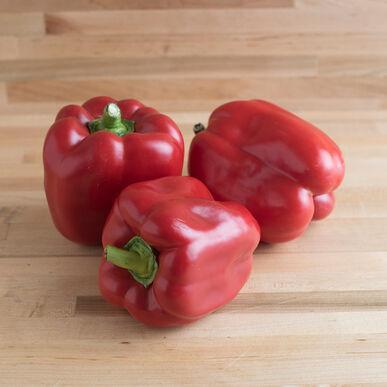 Organic X3R® Red Knight Bell Pepper