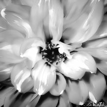 Load image into Gallery viewer, Dahlia