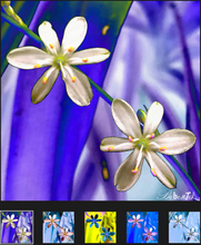 Load image into Gallery viewer, Beacoup de Fleurs YSL V