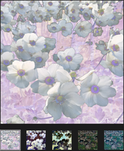 Load image into Gallery viewer, Field of Flowers