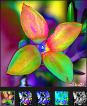 Load image into Gallery viewer, Four Petals