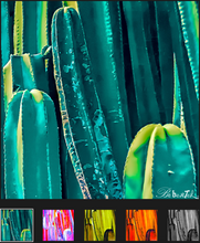 Load image into Gallery viewer, Cacti