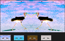 Load image into Gallery viewer, Ibis You