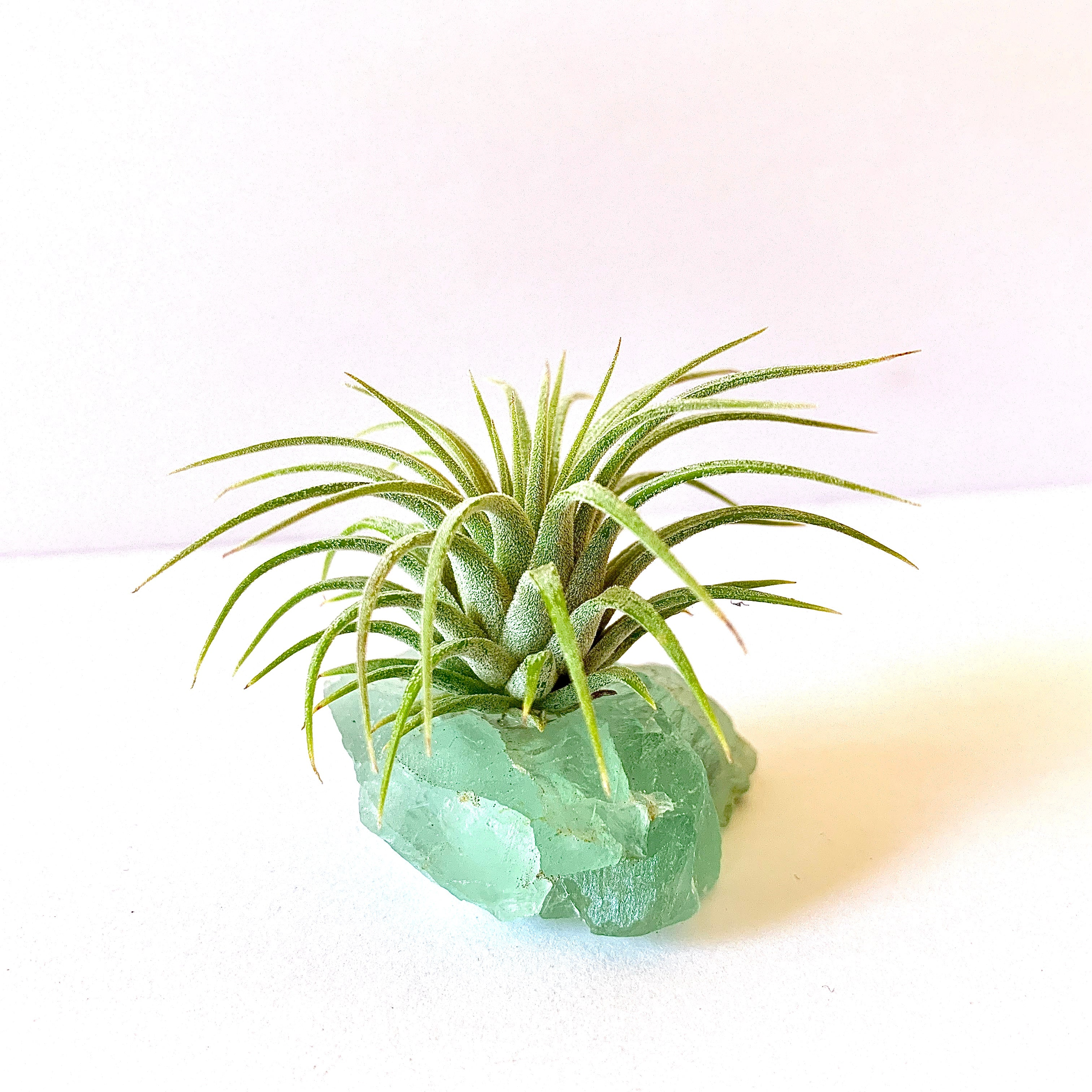 "Fluorite ""Serenity"" Crystal with Live Air Plant, Calming Meditation Room Decor, Gift for Crystal Lovers, Turquoise Gemstone Air Plant Holder"