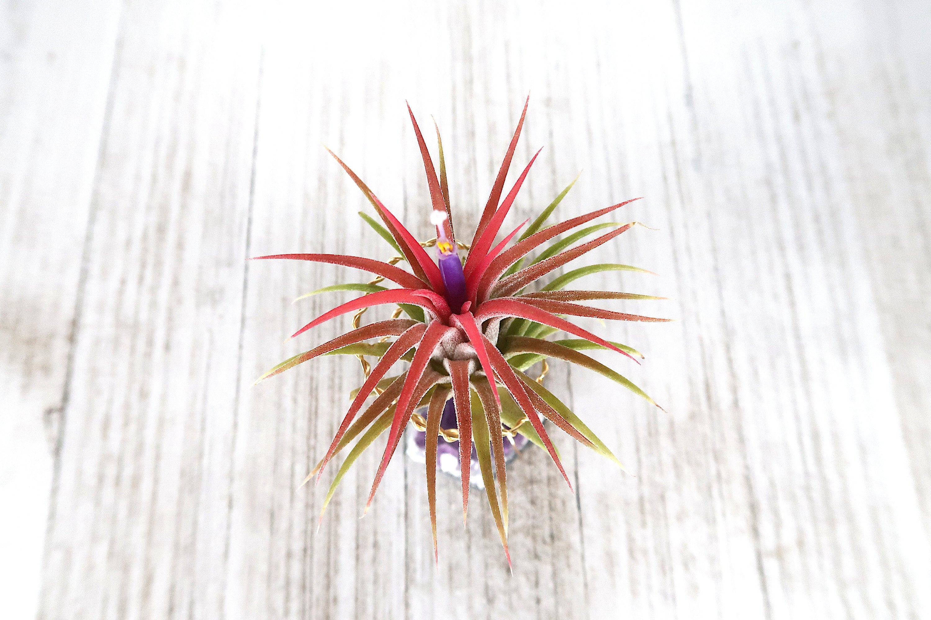 Amethyst Air plant Wired Holder for Intuitives, Air Plant Crystal, Air Plant Holder Desk, Air Plant Display, Air Plant Gift, Air Plant Stand