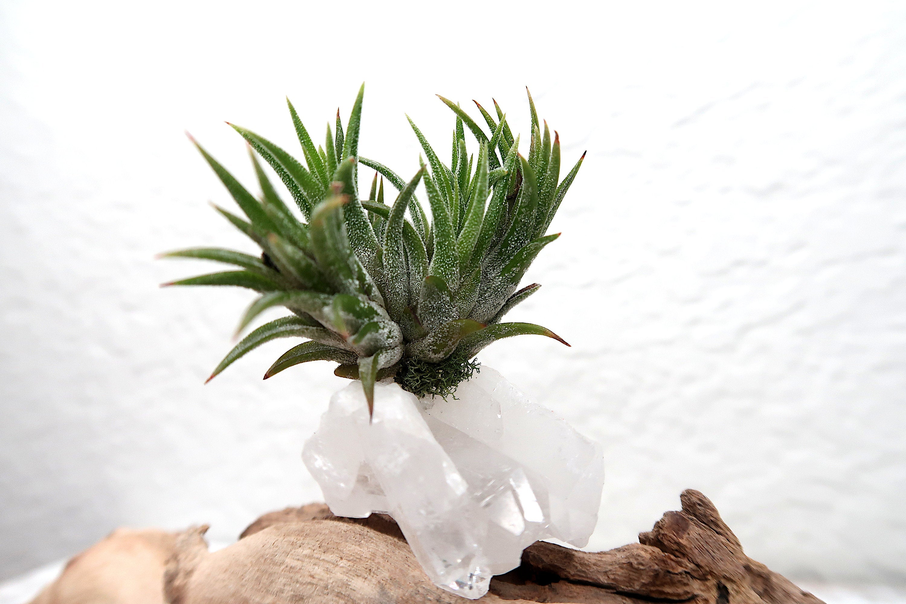 "Clear Quartz ""Dream Manifestation"" Crystal with Air Plant Cluster, White Quartz Plant Gift, Crystal Desk Decor, Mindful Meditation Crystal"