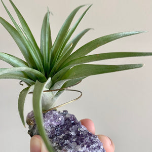 "Amethyst ""Third-eye Intuition"" Crystal Air Plant Holder, Purple Geode Magical Planter, Third Eye Crystal Display for Meditation Room"
