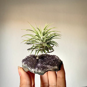 "Amethyst ""Calming, Intuitive"" Crystal and Live Air Plant, Plant Lover Meditation Room Gift, Earth Geode Planter, Gemstone Air Plant Display"