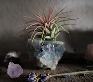 "Rainbow Fluorite ""Serenity"" Crystal with Live Air Plant, Calming Meditation Room Decor, Crystal Gift Display, Gemstone Air Plant Holder"