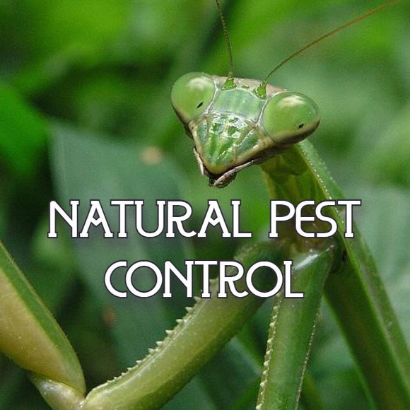 Gardening and Plant Care - Pest Control - All-Natural Insect Control - available from RiceRoadGreenhouses in Ontario, Canada