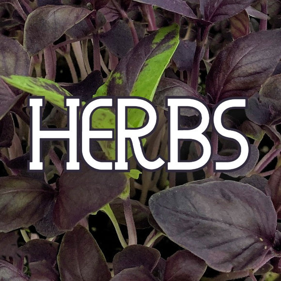 Houseplants - Herbs - available from RiceRoadGreenhouses in Ontario, Canada