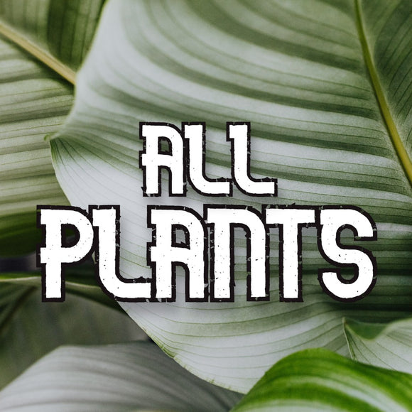 All Plants - available from RiceRoadGreenhouses in Ontario, Canada