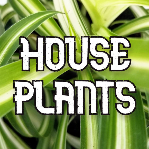 Houseplants - available from RiceRoadGreenhouses in Ontario, Canada