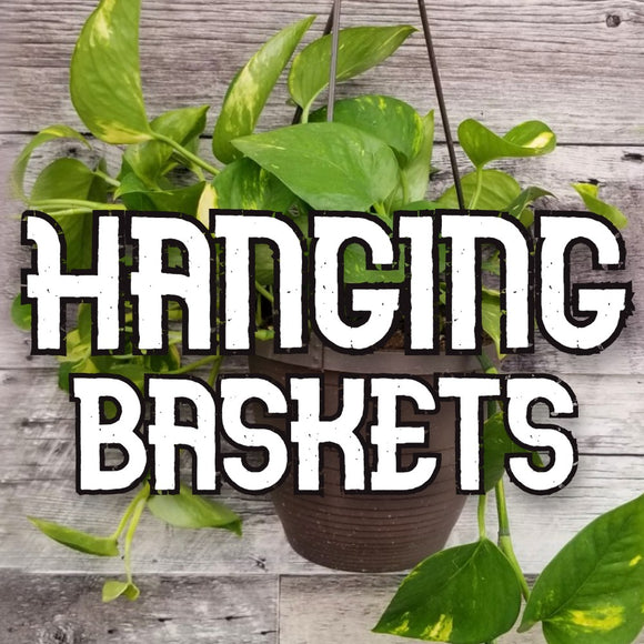 Houseplants - Hanging Baskets - available from RiceRoadGreenhouses in Ontario, Canada