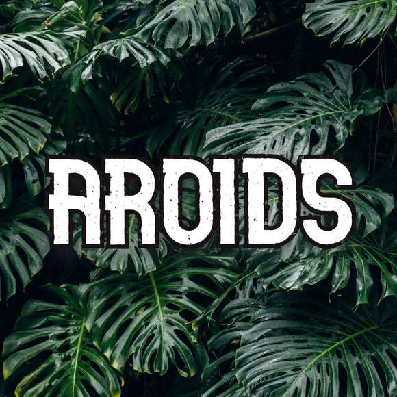 Aroids - available from RiceRoadGreenhouses in Ontario, Canada