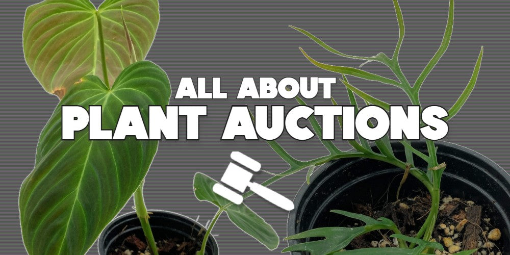 Learn more about Rare Plant Auctions at Rice Road Greenhouses