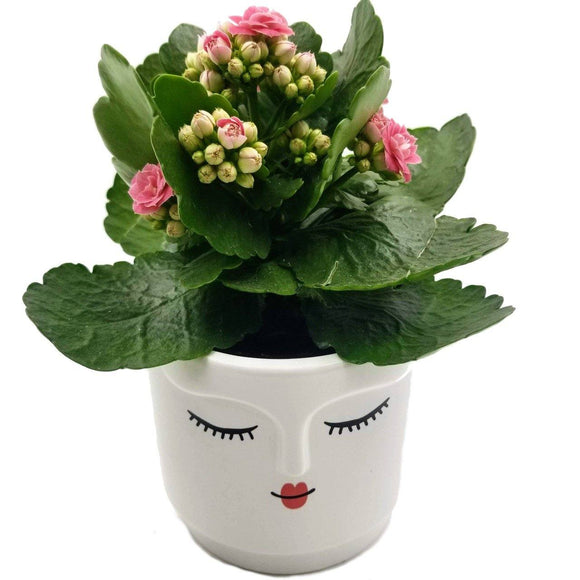 Calm Beauty Ceramic Pot - 4.25