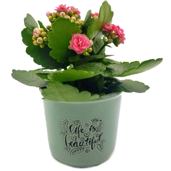 Life is Beautiful Stamped Ceramic Pot - 4.5
