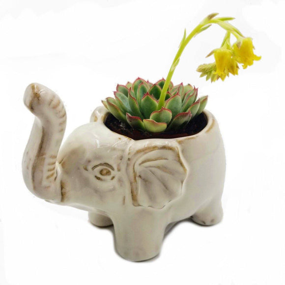 Lil' Lucky Elephant Ceramic Planter